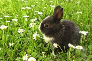 Small Rabbit in Field with Flowers