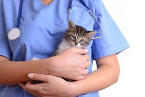 Kitten in the Arms of a Veterinarian