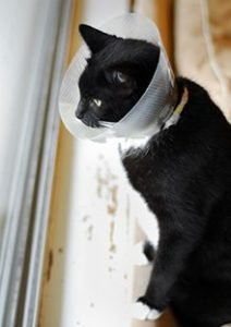 Cat With Cone Around Neck