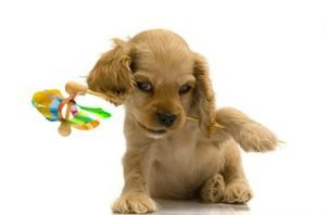 Puppy With Pinwheel in Mouth