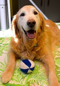Golden Retriever With Ball