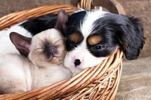 Dog and Cat Cuddling in Basket