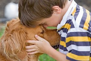 Boy Lovingly Holding Head of Golden Retriever