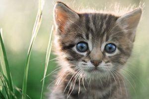 Closeup of Kitten Next to Blades of Grass