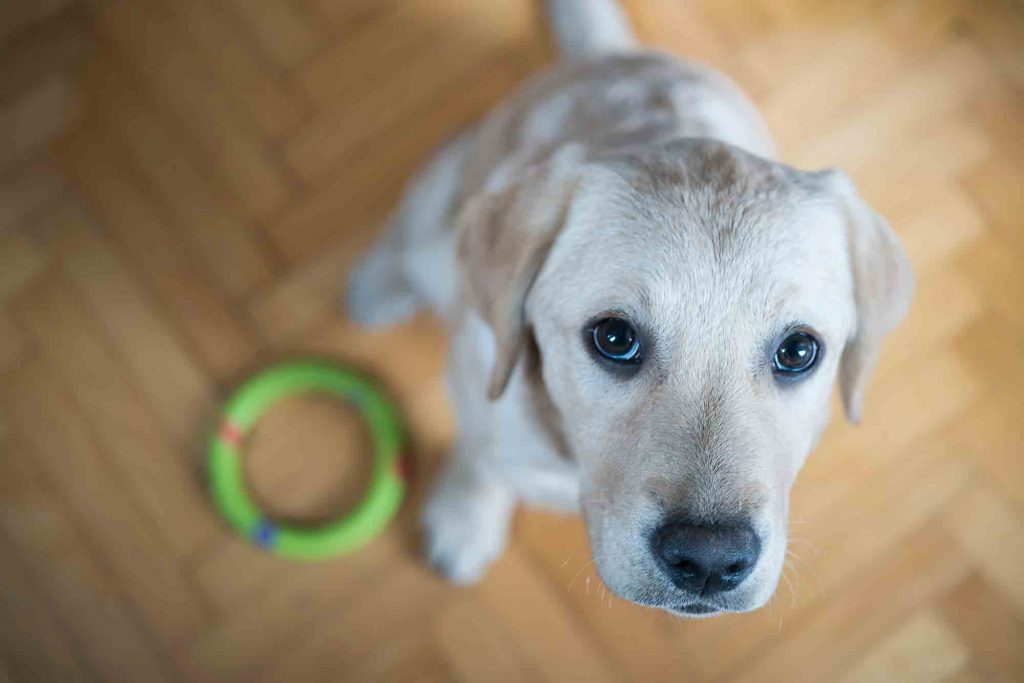 Keep Your Dog Out of the Litter Box