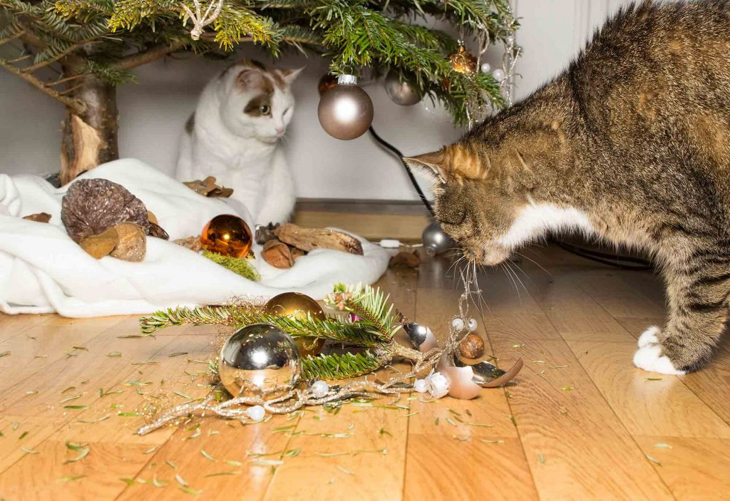 holidays with cats