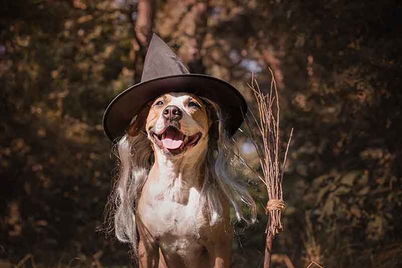 The best pet costumes are the ones your dog will wear happily.