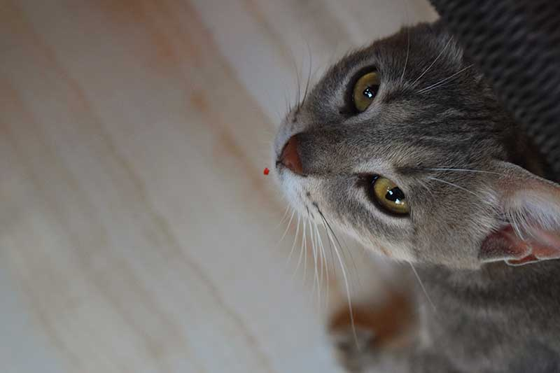 Feline nutrition contributes to cat health