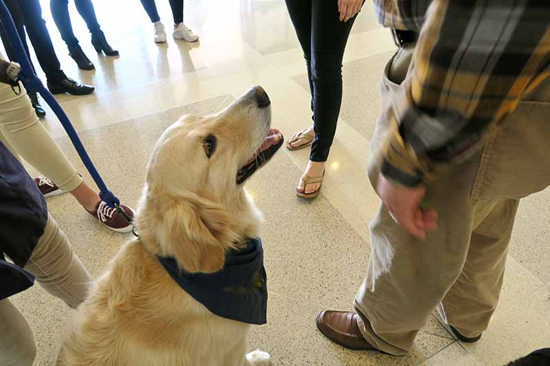 If a service dog approaches you without its owner, there may be trouble.