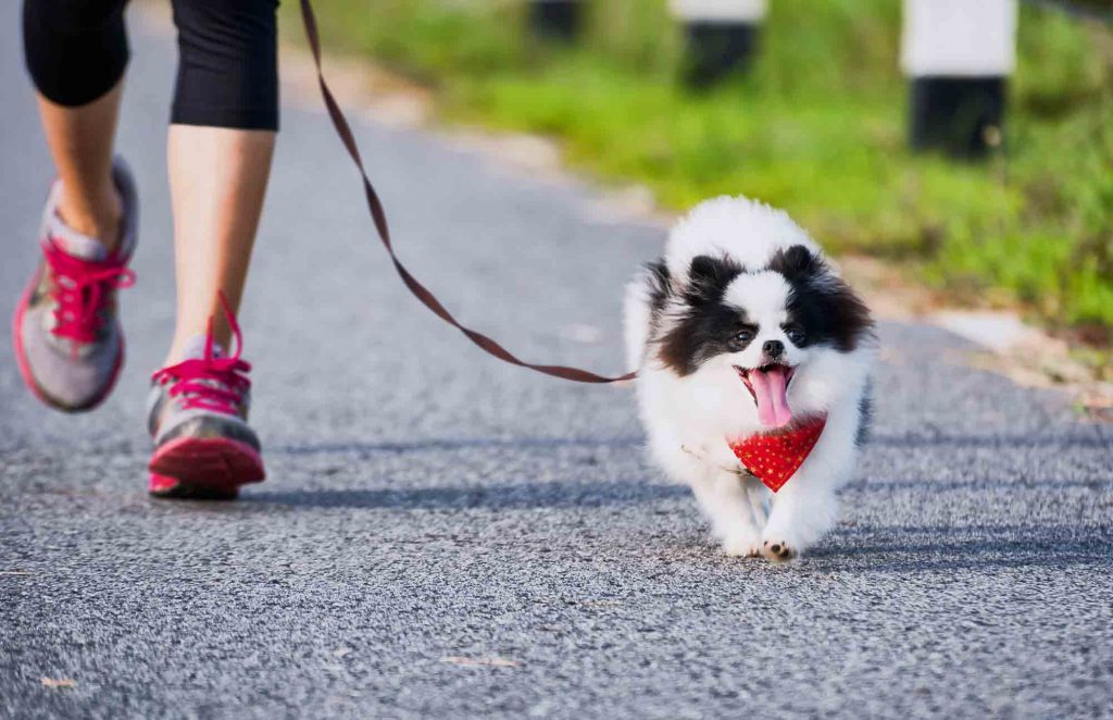 Running with your dog is great pet exercise