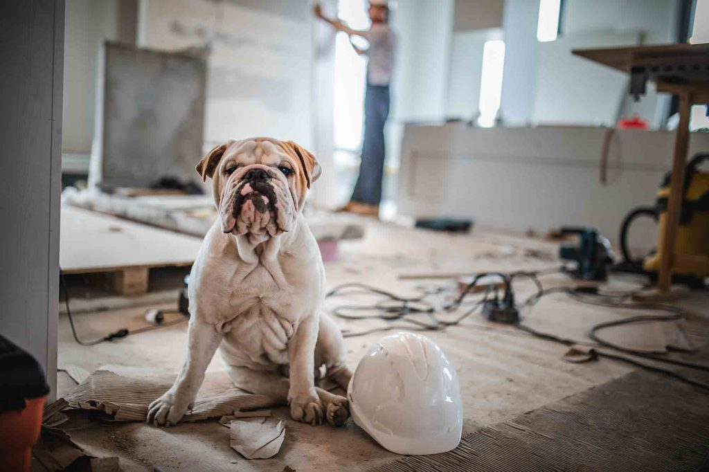 Pet safety during a remodel should be a consideration