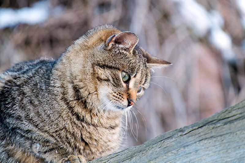 Winter cat care is part of winter pet safety.
