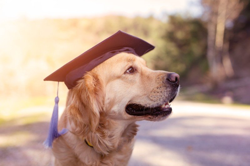 Training blind and deaf pets isn't hard and can improve their quality of life!
