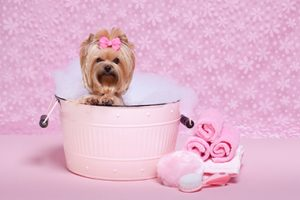 Dog with Pink Bow on Head Taking Bath in Pink Tub