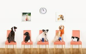 Four Dogs and One Cat Posed on Seats in Waiting Room to Veterinarian