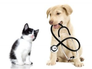 Kitten With Puppy Holding Stethoscope