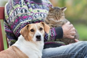 Owner With Cat on Lap Next to Dog